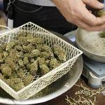 Aumenta venta de mariguana medicinal en Arizona