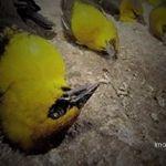 """Indagan """"envenenamiento"""" de aves muertas en bulevar Díaz Ordaz"""