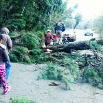 Árboles caídos y comunidades sin luz en Pueblo Nuevo por heladas