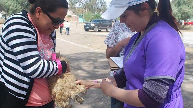 vacunaci_n de mascotas 2