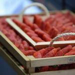 Buscan resaltar sabor de la fresa