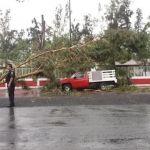 Reportan como delicado de salud a niño que le cayó árbol encima
