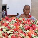 """La Morena"" 34 años trabajando la fresa"