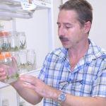 Investigadores de la UG proponen el cultivo del agave para combatir la pobreza y el cambio climático