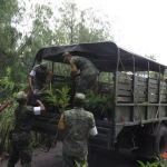 Entrega SEDENA a Cuerámaro 18 mil árboles