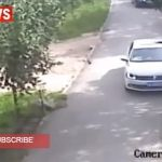 Tigre siberiano mata a turista que no respetó reglas de zoológico