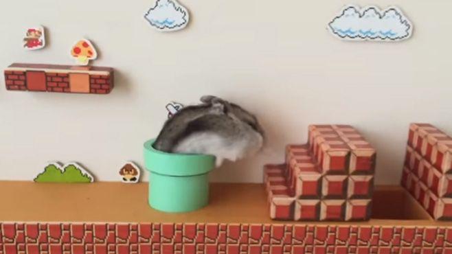 hamster mario bros