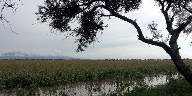 inundaciones-abasolo-cueramaro (1)