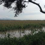 """CONAGUA """"culpable"""" de inundaciones en Cuerámaro y Abasolo"""