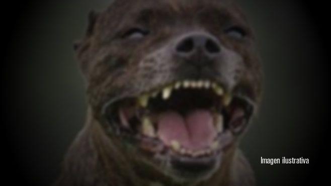 Photo of Atacan y matan perros pitbull a ancianita