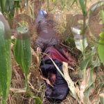 """Encuentran cuerpo en descomposición de """"levantado""""; tenía alrededor de 5 días"""