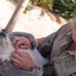 Imogen es un tierno koala que se robó el corazón de miles de internautas
