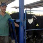 Ordeñar vacas, un negocio que su papá le heredó: productor de leche
