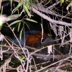 Flotaba en el Lerma; no ha sido identificado