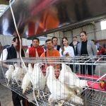 Entregan paquetes de gallinas a 281 familias de 5 comunidades