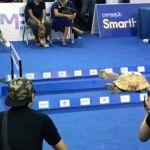 """Tortuga gana a liebre en """"competencia de velocidad"""""""