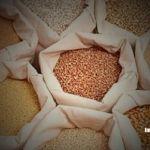 Recuperan semillas robadas al tren en Irapuato y Apaseo