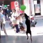 Perrito se divierte como niño, y causa revuelo en redes sociales