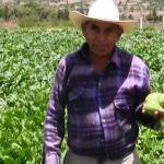 En el Platanal, el paraíso de las frutas y verduras sí existe: Cuerámaro