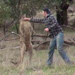 Conoce la historia del hombre que boxea contra canguro para defender a su perro