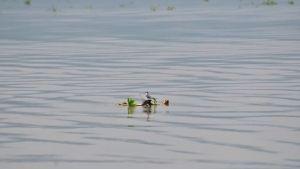 yuriria-especies-laguna-1