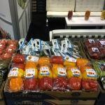 Crecen sectores tradicionales en exportaciones