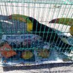 Aseguran en León aves exóticas presuntamente comercializadas de manera ilegal