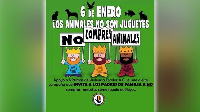Photo of Invitan a Reyes Magos a no comprar animales como regalo para los niños