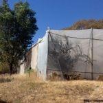 Vivero destruido en Gerontológico de Pénjamo: culpa de SEDESOL