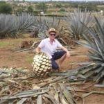 Relanzan «Tequila Express» con Sauza