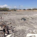 En Irapuato cuidan dos mezquites, en Abasolo matan a cientos: ecocidio