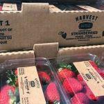 Fresas de Irapuato supuestamente son rechazadas en EU