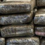 Encuentran 4 toneladas de marihuana en frontera México-Estados Unidos