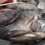 SSG asegura 42.56 kilogramos de producto del mar fuera de norma