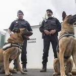 Detectan perros policía cargamento de marihuana en Coahuila