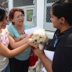 CANI al mes entrega en adopción entre 25 y 30 mascotas