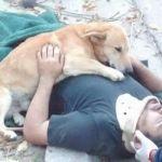 Conmovedora imagen de un perro que cuida a su dueño accidentado
