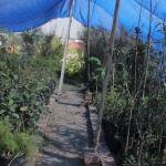 Ecología y medio ambiente ofrece árboles en donación