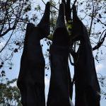 El Jardín de las Esculturas: combina la tranquilidad y el arte