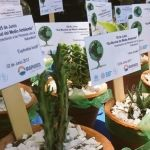 Impulsan acciones a favor del medio ambiente
