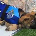 """Despiden a perro policía por ser excesivamente """"tierno y amigable"""""""
