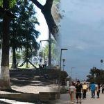 ¿Progreso o progreso?: Tala de árboles en Irapuato