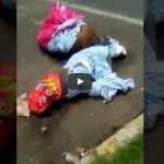 Autoridades investigan muerte de perros pitbull en Coyoacán
