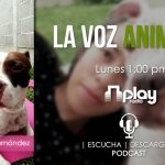 Maltrato animal (La Voz Animal – Podcast 2)
