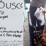 """Apareció """"Morgan"""", el perrito cuyo dibujo se volvió viral"""