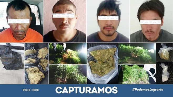 Photo of Incautan miles de plantas de marihuana en Abasolo y Silao