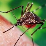 Estima SSG 12 mil casos de dengue en Guanajuato