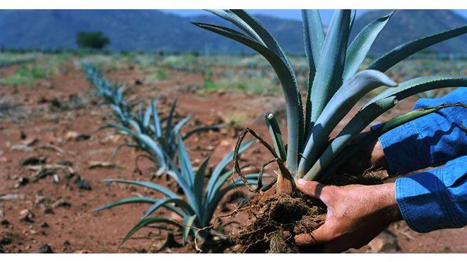Photo of México y su tequila