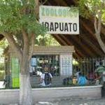 Municipio apoyóa zoológico de Irapuato con 5 millones de pesos