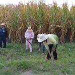 Empleo Temporal ahora en comunidades rurales